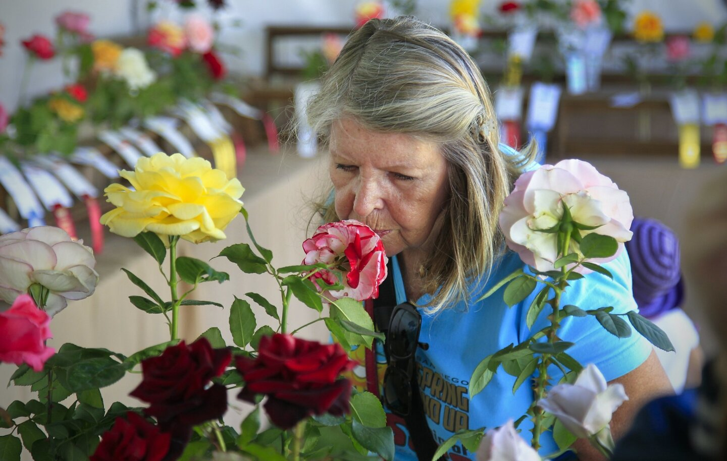 Reena Kaplowitz smells roses on display during the Coronado Flower Show at Spreckels Park.