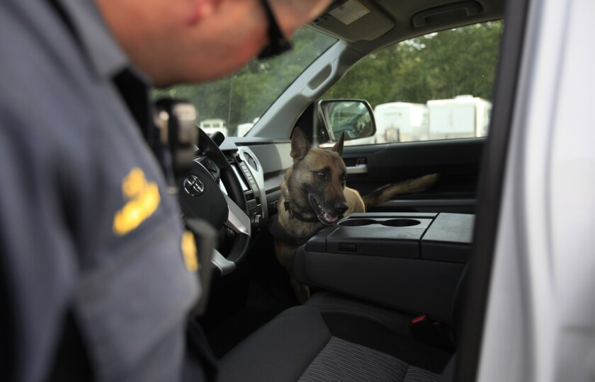 A Ukiah, Calif., police officer works with a dog to search for drugs or cash in a motorist's car on May 14, 2014.