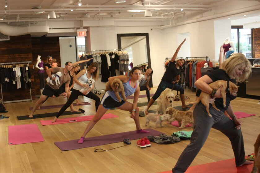 Around 10 yogis, many with dogs, take a class at YogaSmoga in La Plaza La Jolla.