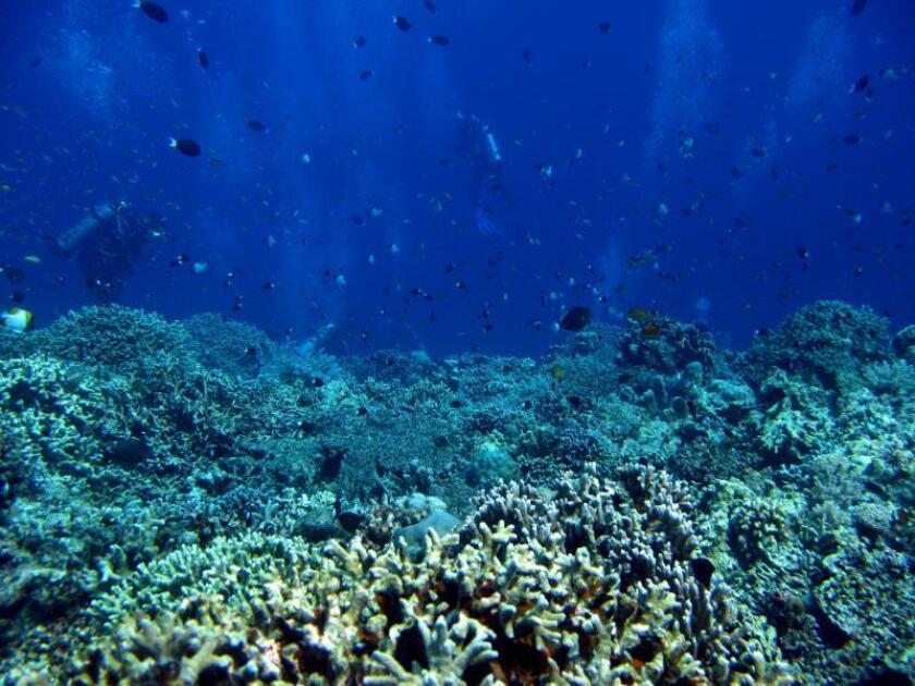 Pequeños peces que viven en arrecifes son cruciales para la vida del coral