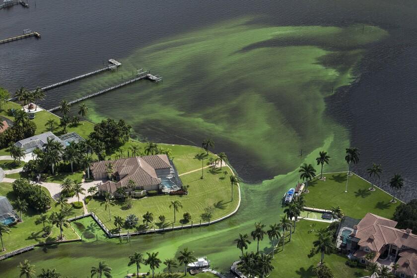 Algae emergency Florida