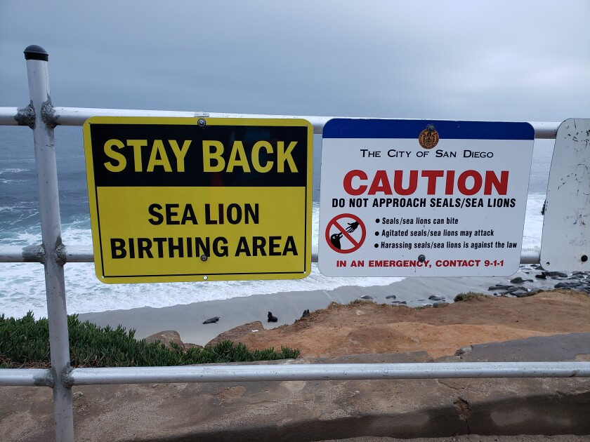 New signs posted over Point La Jolla tell visitors to keep their distance from sea lions.