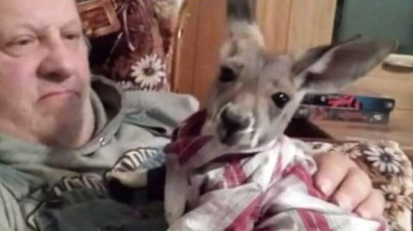 """This owner of this kangaroo named Jimmy was kicked out of a Wisconsin McDonald's  after she brought the """"therapy animal"""" with her."""