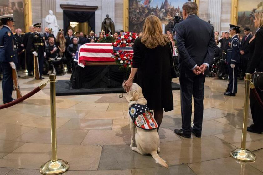 Sully, el perro de servicio que trabajó para el fallecido expresidente George H. W. Bush (1989-1993), presenta sus respetos a los restos mortales del expresidente estadounidense en el Capitolio, en Washington (EE.UU.). EFE