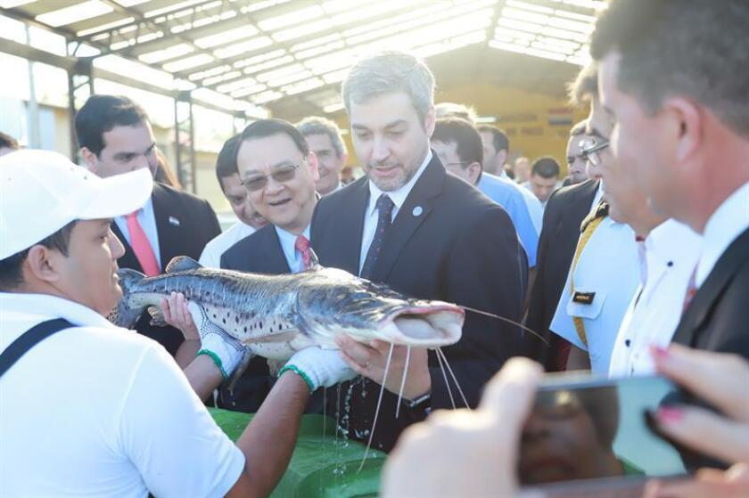 Asuncion, Nov. 20, 2018: The governments of Paraguay and Taiwan signed a letter of intent Tuesday with the purpose of raising 200,000 surubi catfish, a species that is in high demand but declining in numbers, in captivity. EPA/EFE/Courtery of the Paraguayan government/