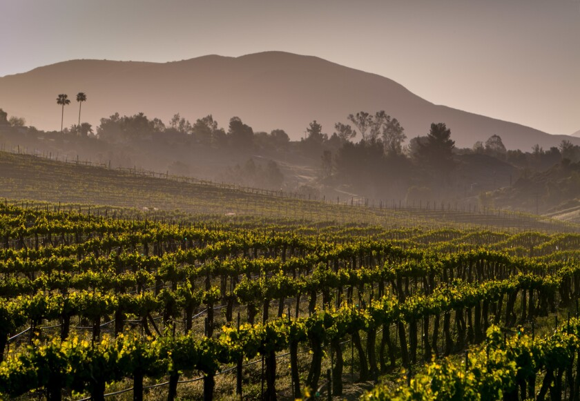 Exploring Southern California's Wine Country