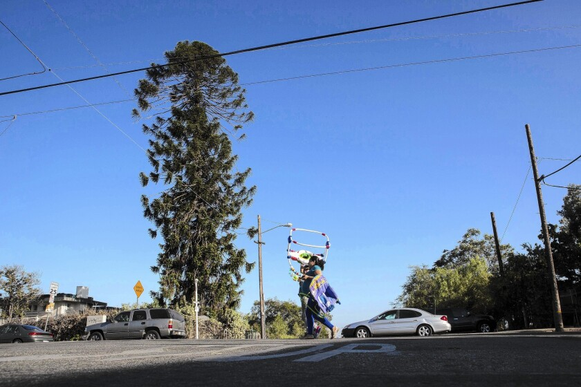 """The East L.A. tree known as """"El Pino Famoso,"""" which was featured in Taylor Hackford's 1993 film """"Blood In Blood Out."""""""