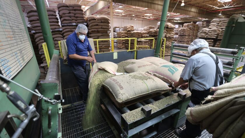 Workers pour out bags of green coffee just brought in from plantations around the world to be clean