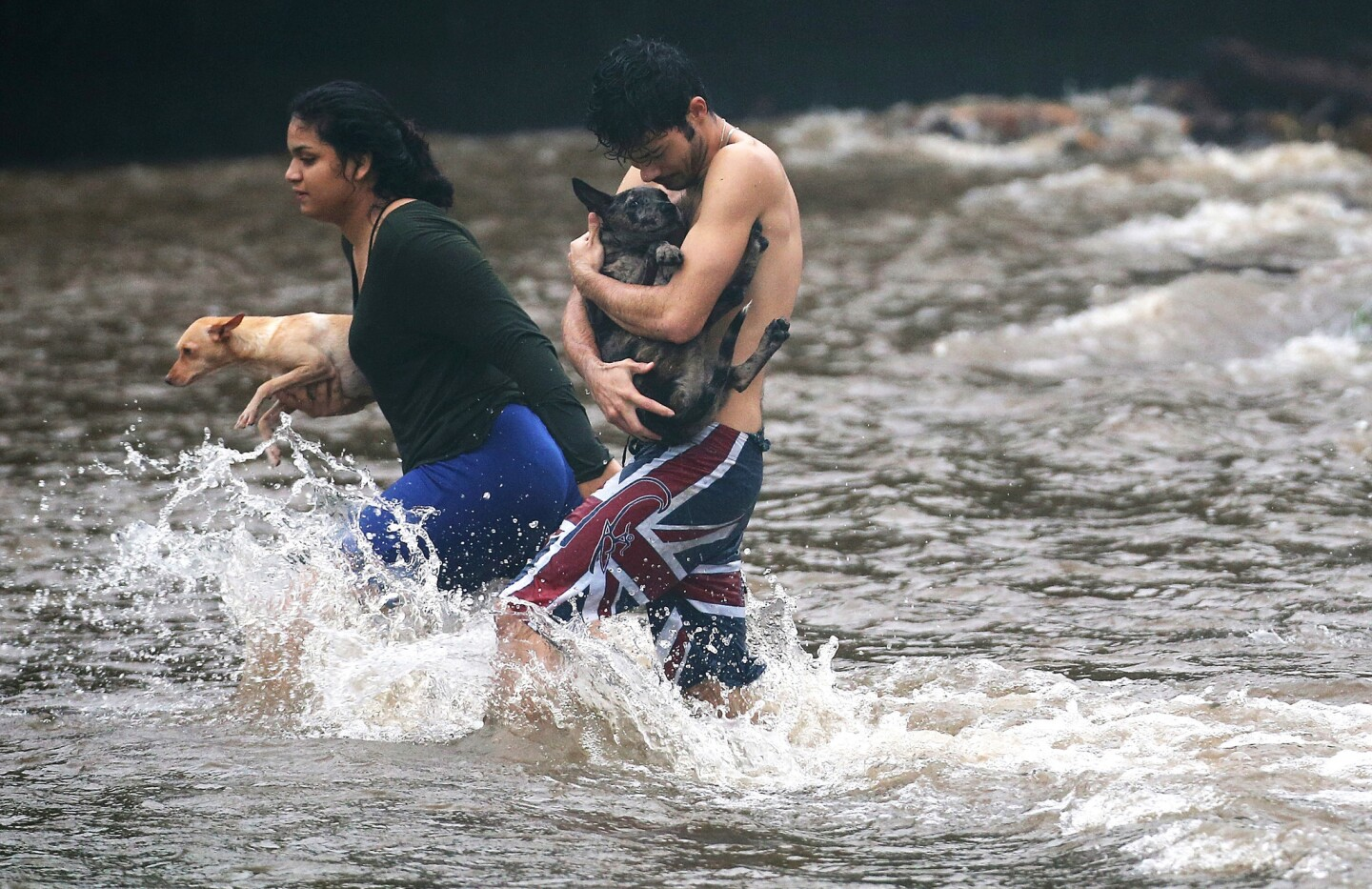 Residents carry dogs through flood waters to dry land, after playing in the water briefly on the Big Island in Hilo.
