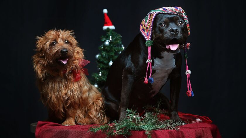 Happy Holidays from the Essential Arts & Culture dogs, Henry and Bonnie.