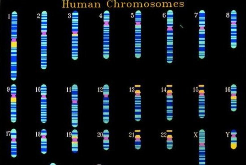 The decoding of the human genome has enabled scientists to identify the causes of some diseases and, in some cases, develop treatments to fight them.