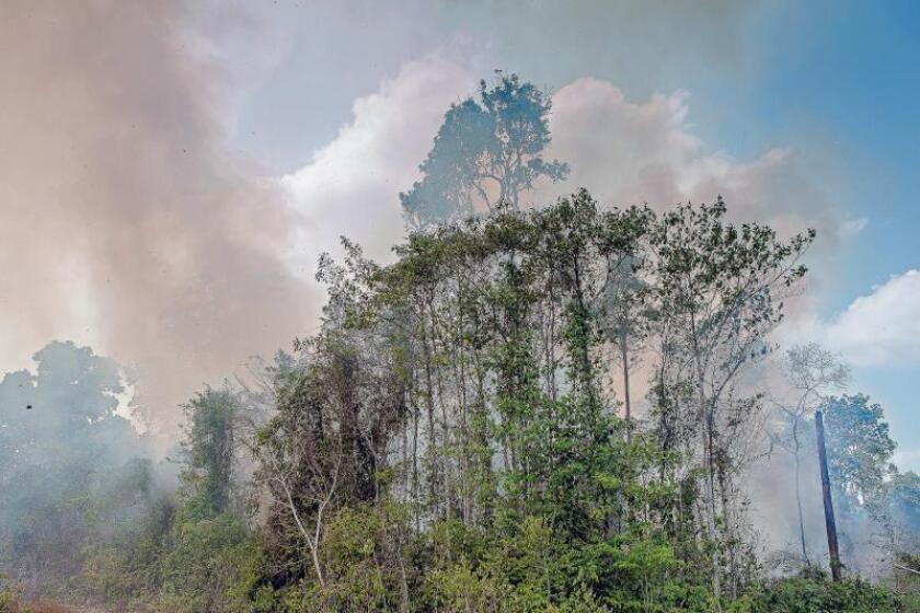 """""""Están destruyendo la Amazonía para alimentarnos"""""""