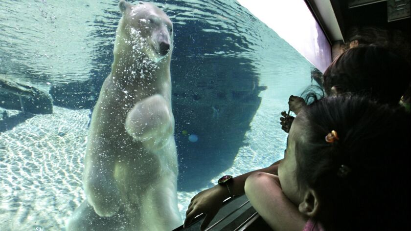 October 3, 2006. San Diego, CA. Visitors at the San Diego Zoo watch a polar bear swim in a glass