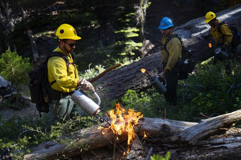 Prescribed burning in Sequoia National Park