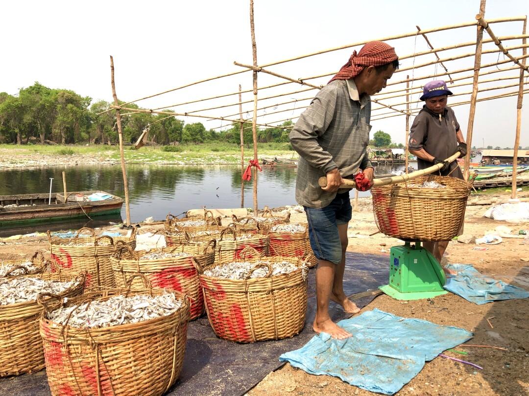 Fisherman at Chhnok Tru Cambodia