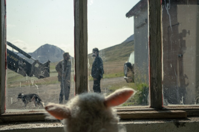 """A lamb looks out a window at two men and a dog in the movie """"Lamb."""""""