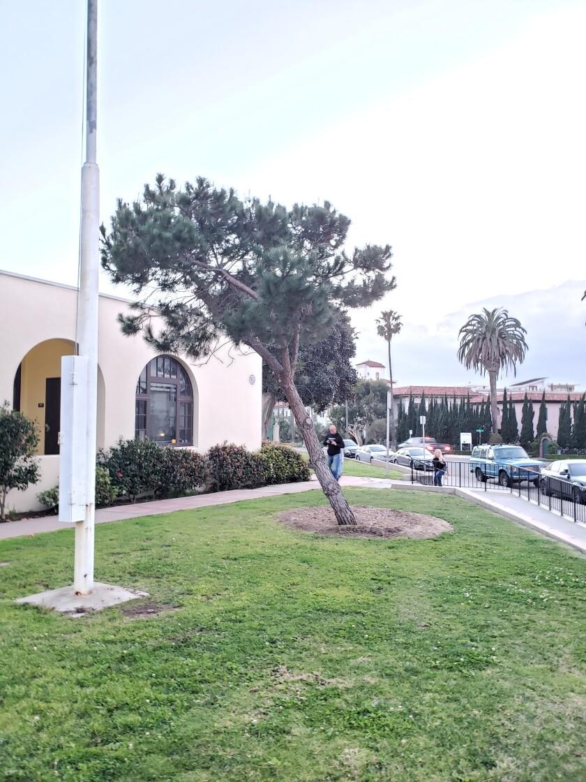park-rec-tree-1.jpg