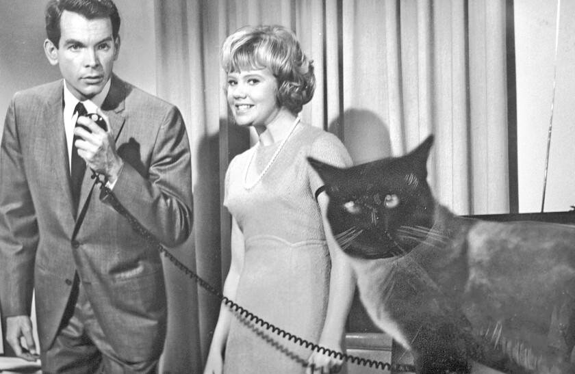 """Dean Jones and Hayley Mills in """"That Darn Cat!"""""""