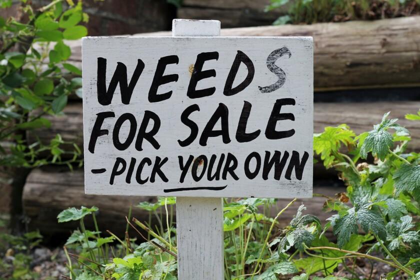 Weeds for Sale wooden sign in garden