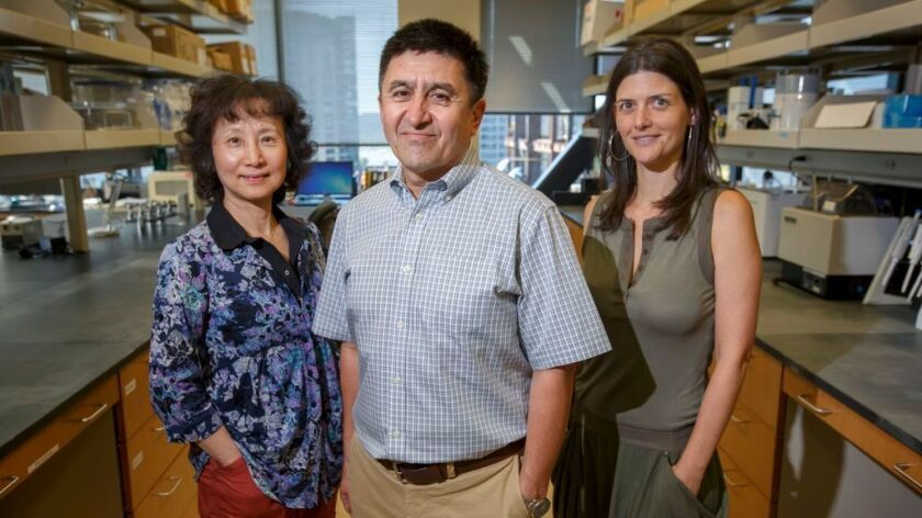 Study leader Shoukhrat Mitalipov with coauthors Hong Ma, left, and Nuria Marti-Gutierrez.