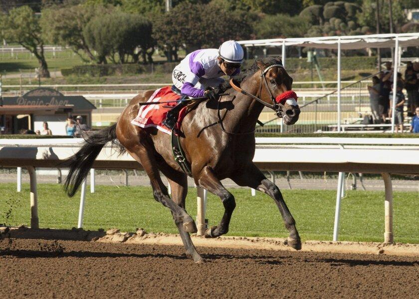 Nyquist and jockey Mario Gutierrez win the Grade II $200,000 San Vicente Stakes at Santa Anita Park, Arcadia, Calif., Monday, Feb. 15, 2016. (Benoit Photo via AP)