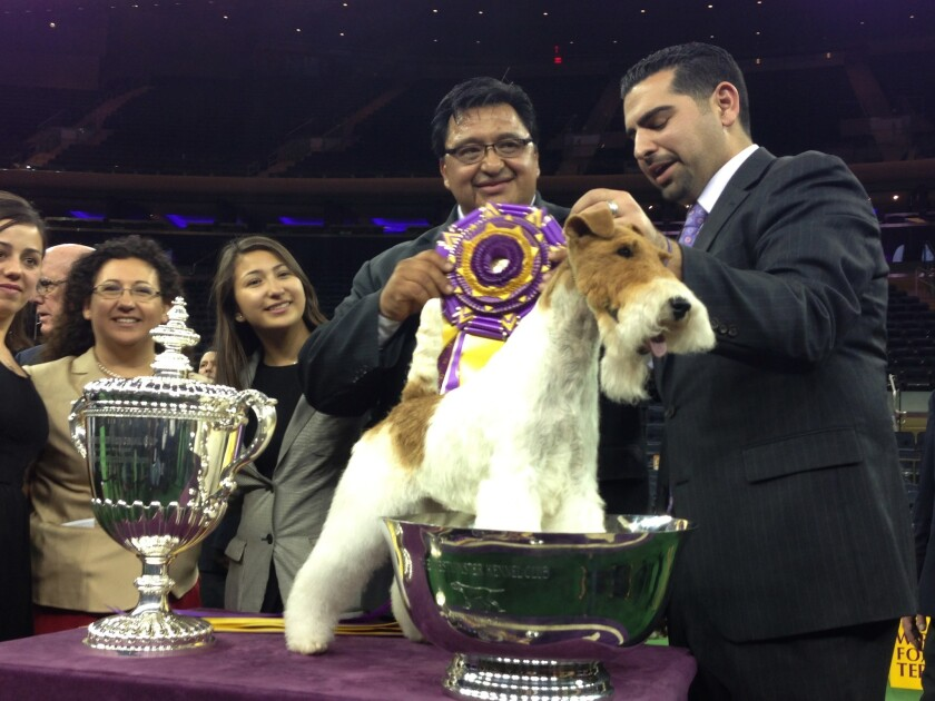 Sky, a wire fox terrier, shown by Gabriel Rangel, center, at the Westminster Kennel Club Dog Show in New York. Sky defeated six other dogs, whittled down from a field of more than 2,800.