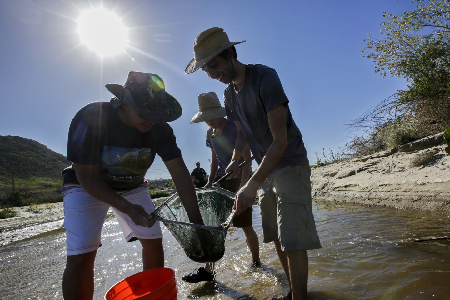 Brian Wang, 20, left, Perry Lau, 21, and Parsa Saffarinia, 24, all students from UC Riverside, catch and rescue threatened Santa Ana sucker fish from the Santa Ana River after a treatment plant halted flows into a stretch of the waterway in Colton.