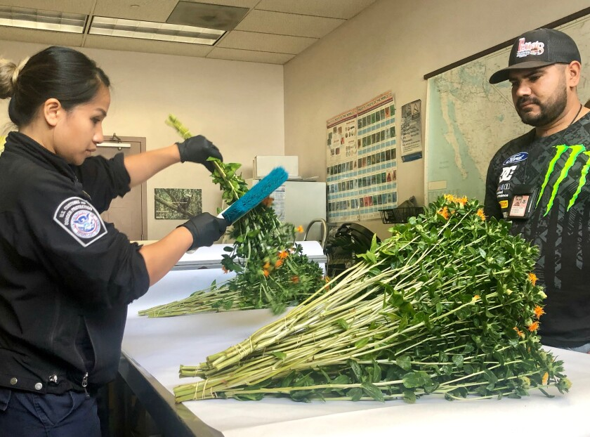 Two agents from CBP's agriculture unit
