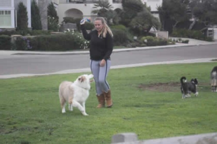 During a romp at Calumet Park, this dog plays fetch, off leash, with its owner. Ashley Mackin