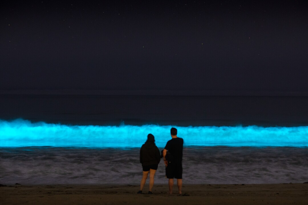 HERMOSA BEACH, CA - APRIL 25: Bioluminescent waves glow off the coast of Hermosa Beach, CA, Saturday, April 25, 2020. The phenomenon is associated with a red tide, or an algae bloom, filled with dinoflagellates which react with bioluminescence when jostled by the moving water. During the daytime, due to the pigmentation of the dinoflagellates, the water can turn a deep red, brown, or orange color, giving red tides their name.(Jay L. Clendenin / Los Angeles Times)