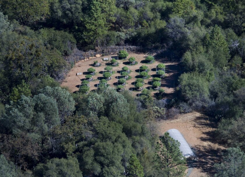 Fish and Game wardens search for illegal marijuana farms in the Sierra Foothills in 2012. An explosion of pseudo-legal medical marijuana farms has dramatically changed the region's landscape in recent years.