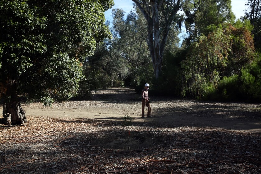 A person walks in the Australia section at the Los Angeles County Arboretum.