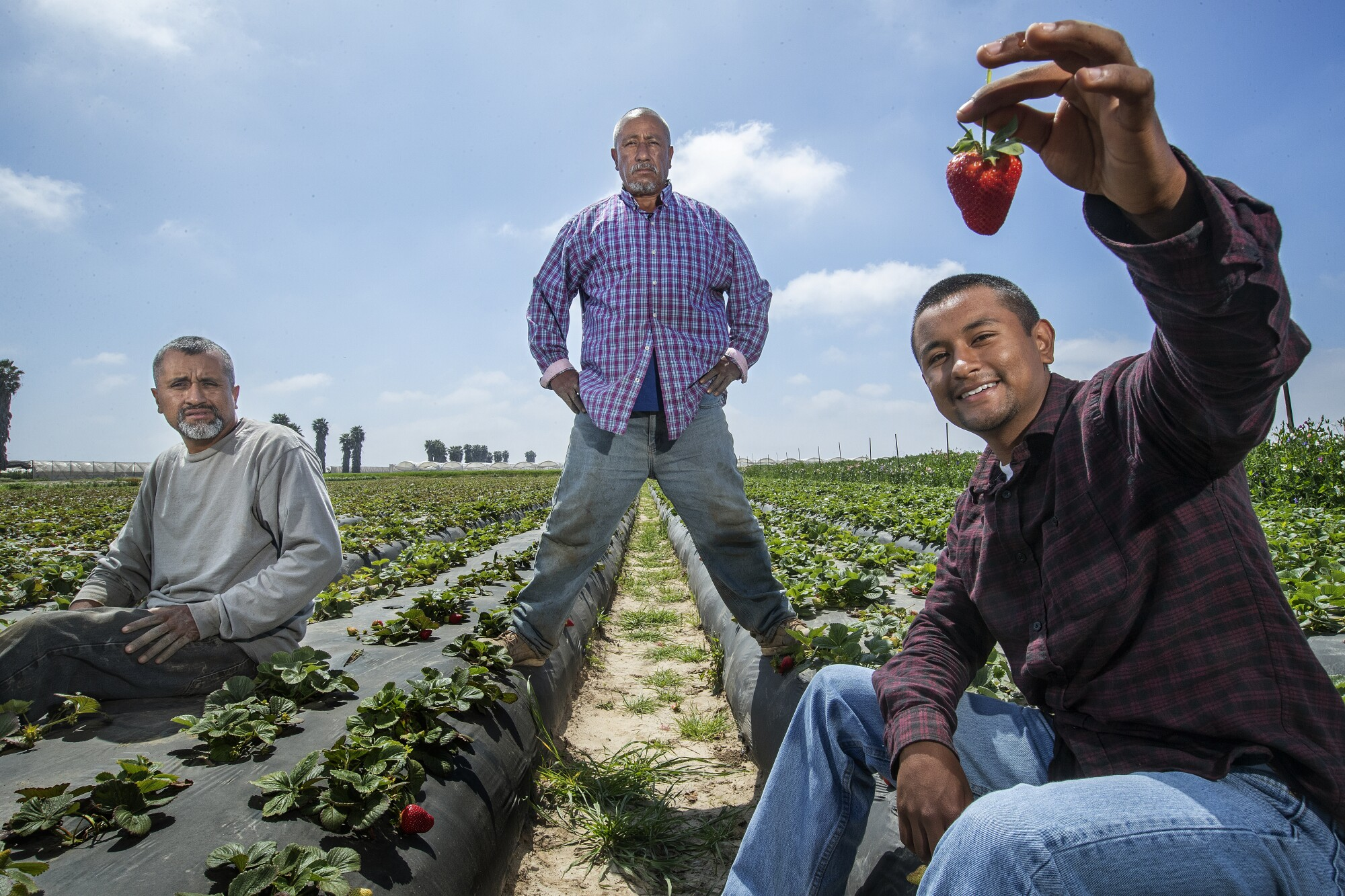 The strawberry-growing Carranza family