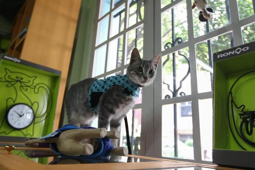 Vista de un gato que mira desde una ventana. EFE/Archivo