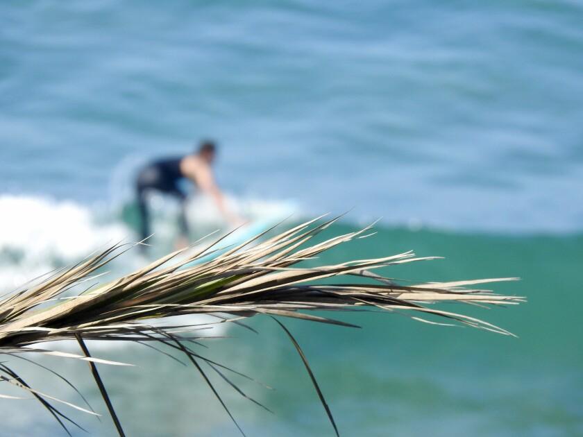 Un surfista en la costa de San Diego