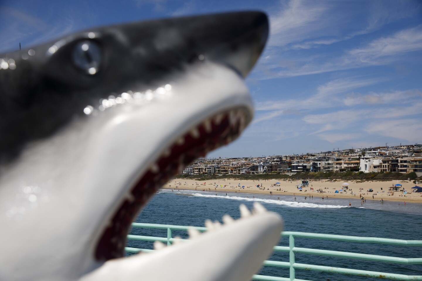 A model of a Great White Shark (Carcharodon carcharias) frames homes on The Strand from the Roundhouse Aquarium on the Manhattan Beach Pier on Sunday, August 18, 2019 in Manhattan Beach, CA. (Patrick T. Fallon/ For The Los Angeles Times)