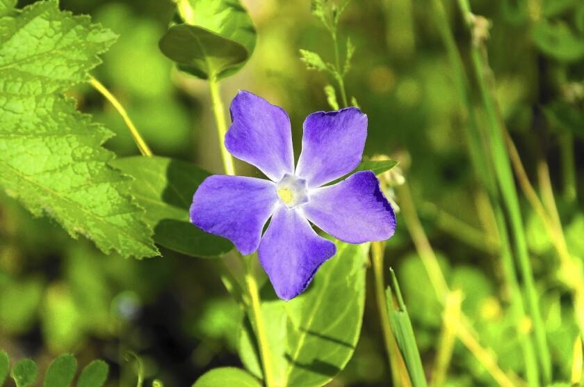Effort to fight invasive plants in California targets nurseries