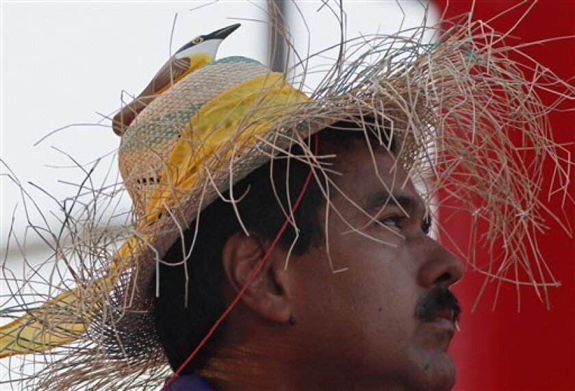 "Venezuela's acting President Nicolas Maduro wears a farm worker's hat with the figure of a bird perched on the hat's crown during a presidential election campaign rally in Catia La Mar, Venezuela, Tuesday, April 9, 2013. Maduro assured last week during a campaign rally that Venezuela's late President Hugo Chavez appeared to him as a ""very small bird"" to give him his blessing. Maduro, Chavez's hand-picked successor , is running for president against opposition candidate Henrique Capriles in the"