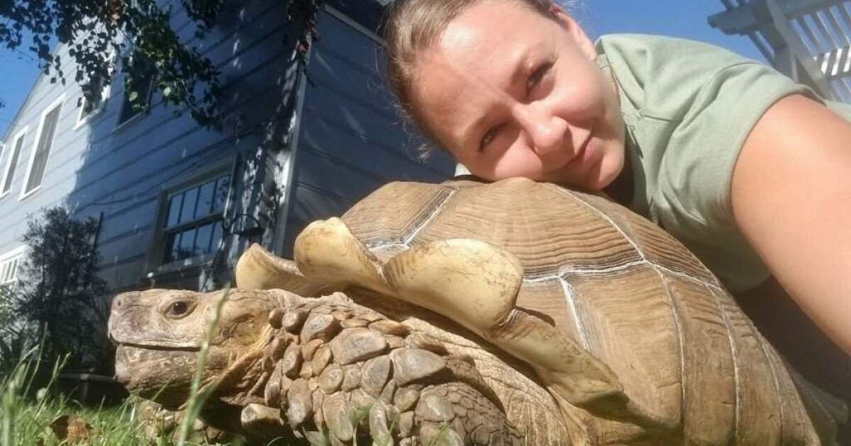 """""""I think my blockhead escaped': Tortoise cruises out of Long Beach backyard and around neighborhood"""