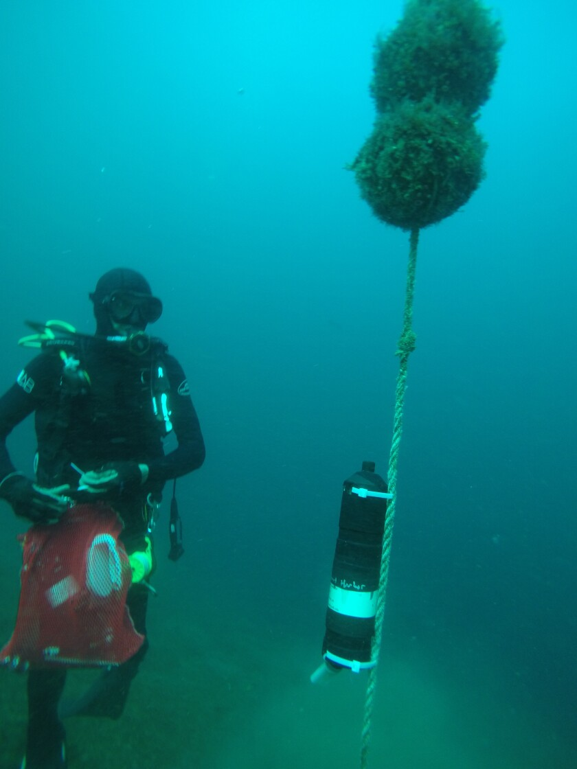 Lowe's research into local shark populations includes underwater acoustic receivers that are placed off Del Mar.