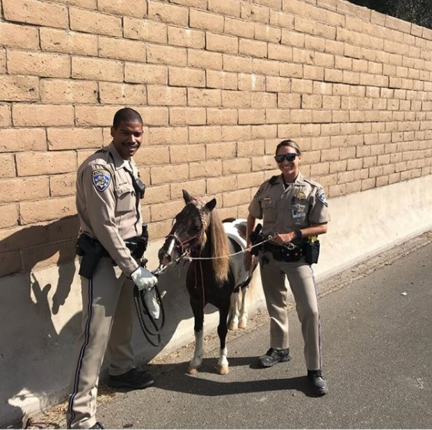 California Highway Patrol officers helped rescue a pony from the 91 Freeway on Sunday.