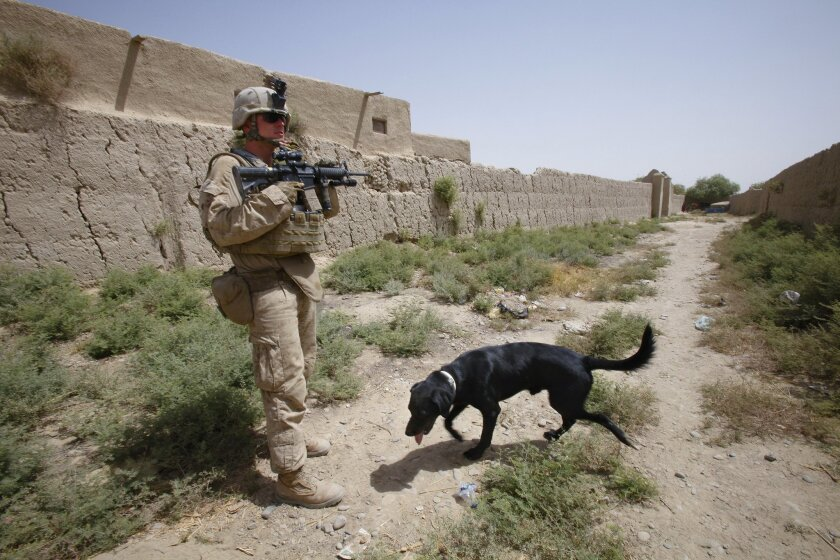 Sgt. Andrew Mulherron on a patrol in Laki, Afghanistan back in 2010, when he was a lance corporal and deployed with his comb-detection dog, Cpl. Boone.