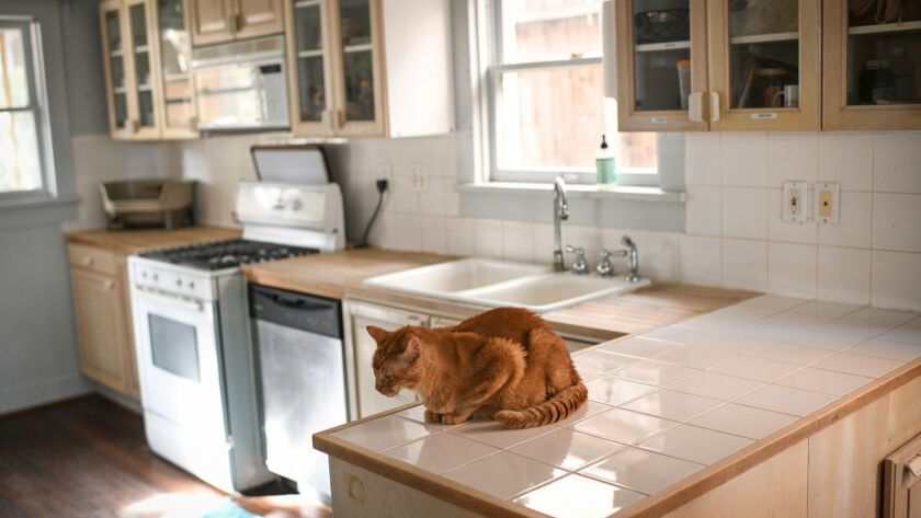 A cat named Newman is pictured inside the feline residence owned by Patti Thomas on Sunday, Dec. 16,