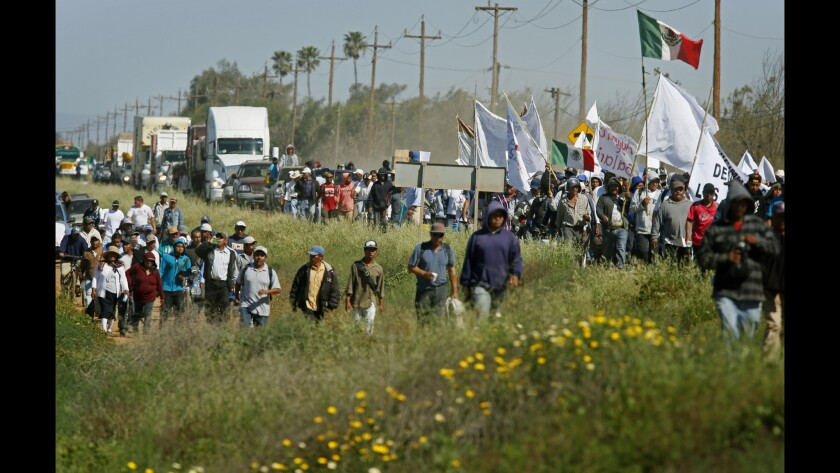 Striking farmworkers in Baja California march by the thousands along the Baja Trans Peninsular Highway near San Quintin, Mexico, in a peaceful but angry show of force after growers refused to meet their demands to boost wages.