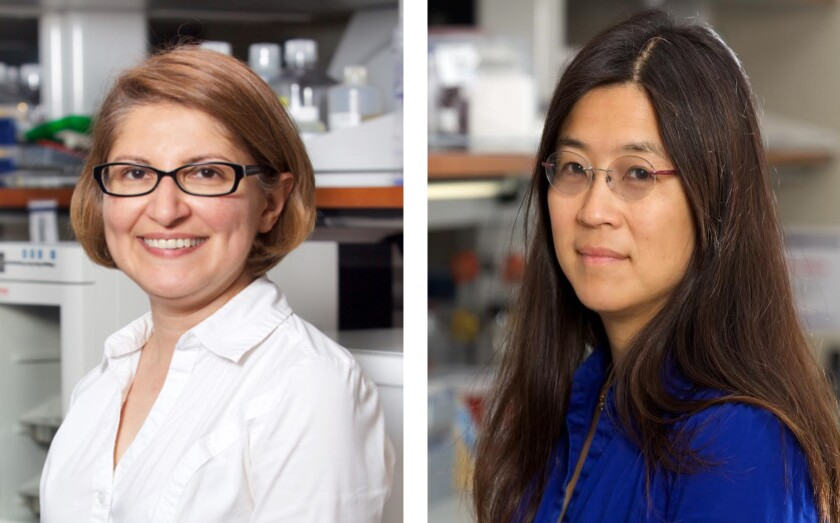 Dr. Mana Parast (left) and Dr. Louise Laurent are co-directors of UCSD's Center for Perinatal Discovery.