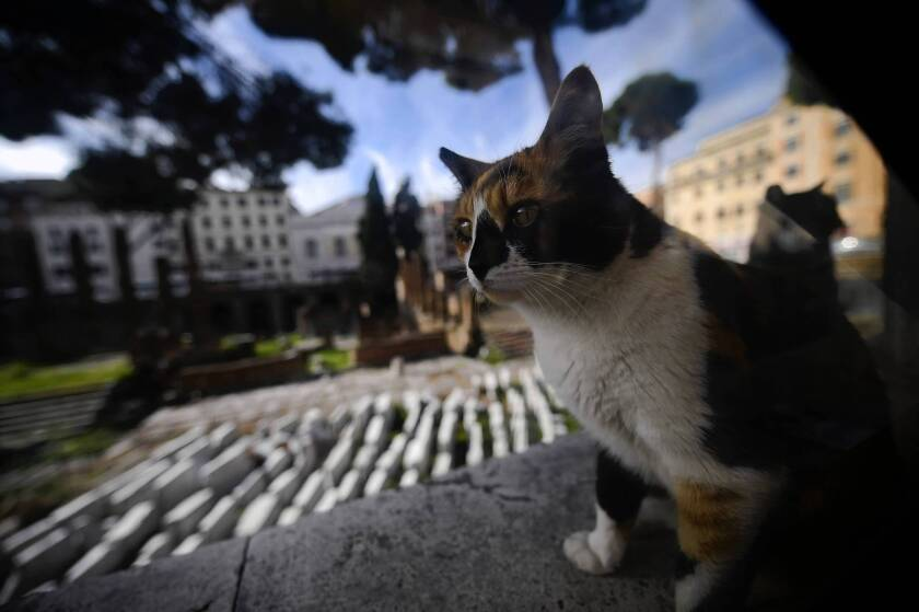 Italy officials get territorial about cat shelter