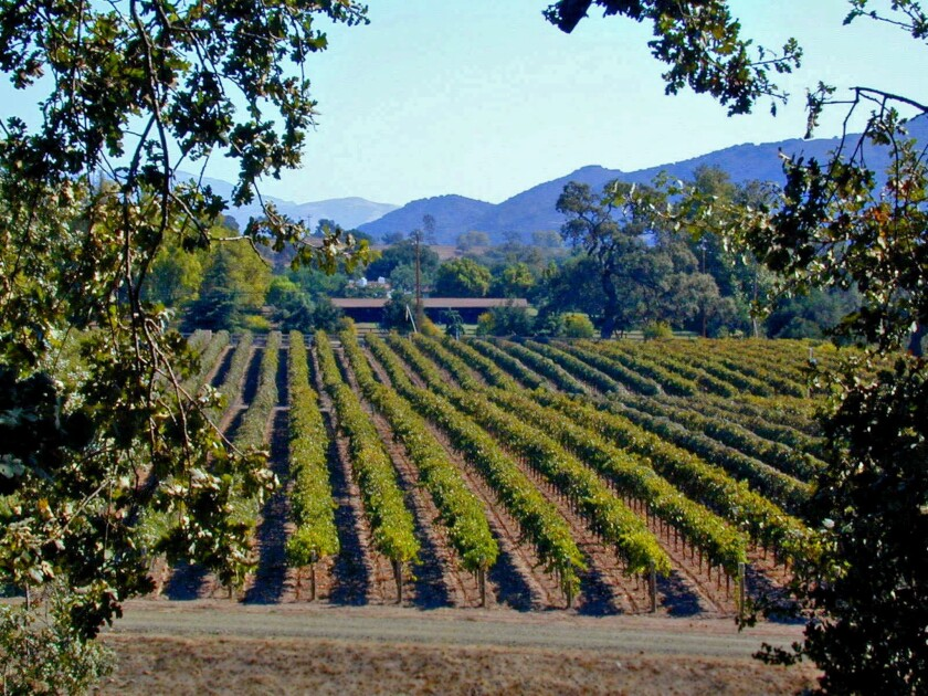 The Santa Ynez Valley is the setting for the Harvest Celebration, hosted by Mattei's Tavern near Los Olivos in collaboration with Terroir, a collection of wineries owned by Charles and Ali Banks.