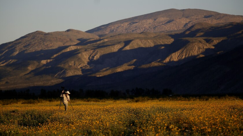 Mike Lightner of Boulder, Colo., photographs flowers at Anza-Borrego Desert State Park in San Diego County.