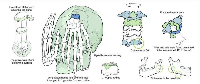 This is a schematic representation of the bones recovered from a burial site at Lapa do Santo.