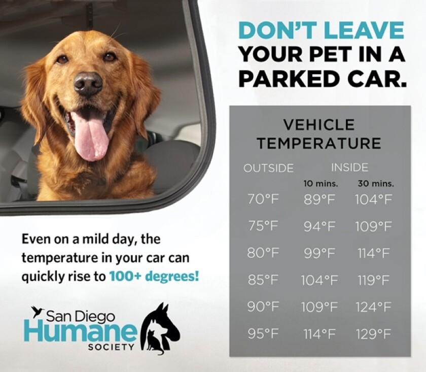 San Diego Humane Society tiene consejos para la seguridad de las mascotas